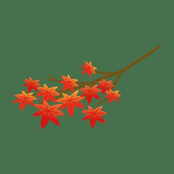 モミジの枝のイラスト