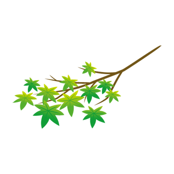 青モミジの枝のイラスト
