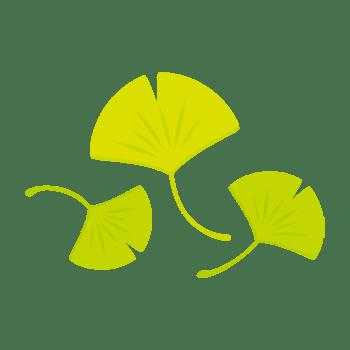 青イチョウの葉のイラスト