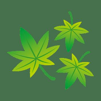 青モミジの葉のイラスト